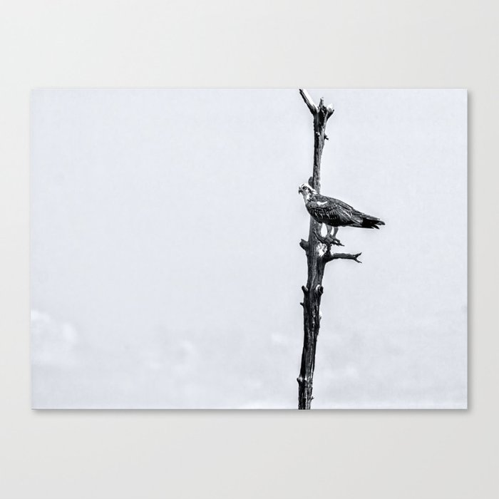 Lonely Perch Canvas Print