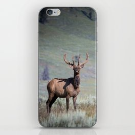 Yellowstone Elk iPhone Skin