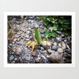 Leaf Bug Art Print