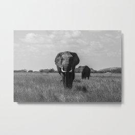 The Elephants (Black and White) Metal Print