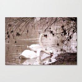 Swans friendship Canvas Print