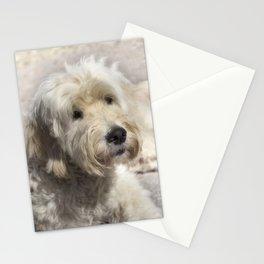 Dog Goldendoodle Golden Doodle Stationery Cards
