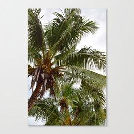 Costa Palms Canvas Print