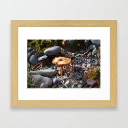 Toadstool Framed Art Print