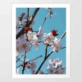Blossom Floral Art Print