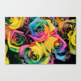 Beautiful Color Roses in Bloom Canvas Print