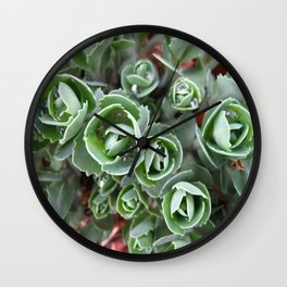 Hylotelephium spectabile Wall Clock