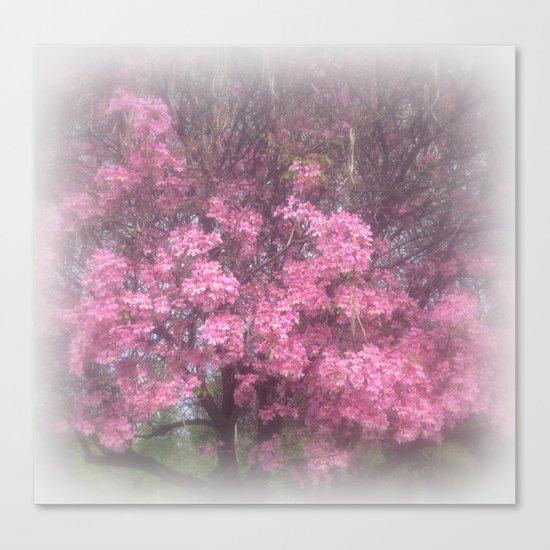 cherry's blossom - 3 Canvas Print