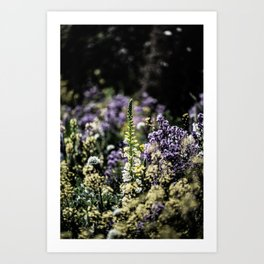 Flower Photography by james shepperdley Art Print