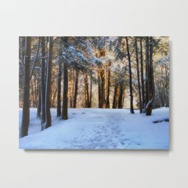 A Winter Morning in the Woods Metal Print