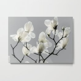 Gray Magnolia and White Metal Print