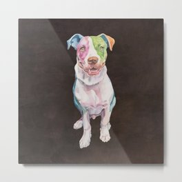 American Bull Terrier Metal Print