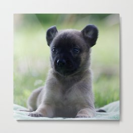 A yellow Shepherd puppy Spok Metal Print
