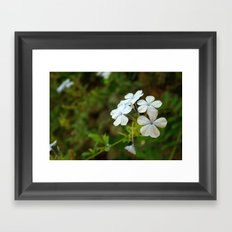 White little flower Framed Art Print
