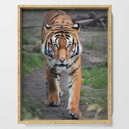 The Bengal Tiger Serving Tray