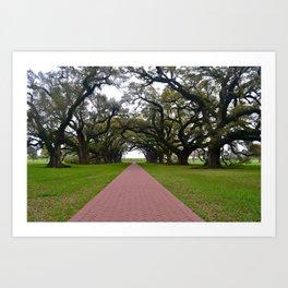 Trees & Walkway Art Print