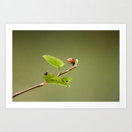 Ladybug Macrosphere Art Print