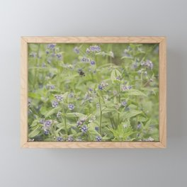 Bee in the forget me nots Framed Mini Art Print