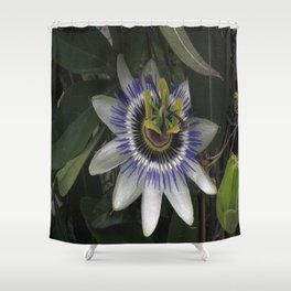 Delicate and Beautiful Passiflora Flower Shower Curtain