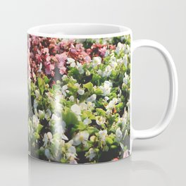 Central park flowers flowerbed surface Coffee Mug