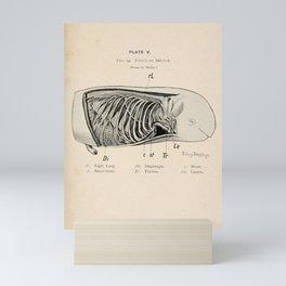 W Sidney Berridge - A Book of Whales (1900) - Figure 14: Foetus of a Beluga Whale Mini Art Print