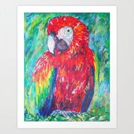 Beautiful Scarlet Macaw Art Print