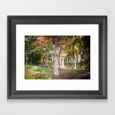 Trees at Wellesley  Framed Art Print