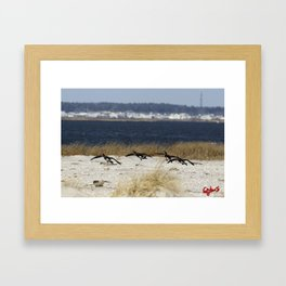 CANADIAN GEESE: the jersey shore Framed Art Print