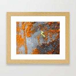 Inchworm Framed Art Print