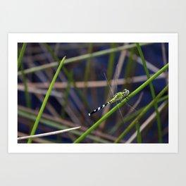 Green Dragon Fly Art Print