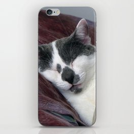 Cat Napping iPhone Skin