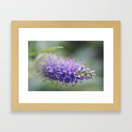 Unremembered acts of kindness... Framed Art Print