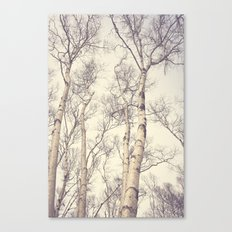 Winter Birch Trees Canvas Print