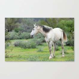 Spirit of the Wild Horses Canvas Print