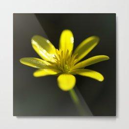 Petals of yellow  Metal Print