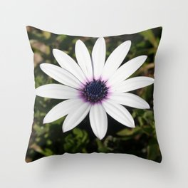 White African Daisy Throw Pillow
