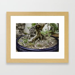 Bonsai 3 Framed Art Print