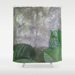 Urban Plant hydrangea leaves on concrete wall Shower Curtain