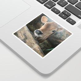 Baby Calf Sticker
