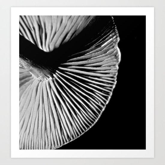 Toadstool 1 Art Print