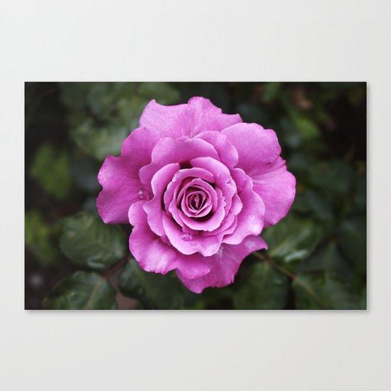 Rose, dear Canvas Print