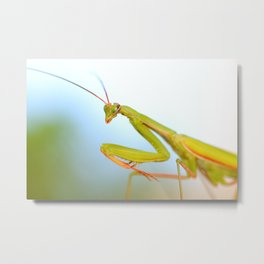Macro of Mantis Metal Print