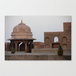Monkeys at Agra Fort Canvas Print
