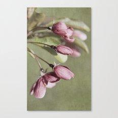 Buds Canvas Print