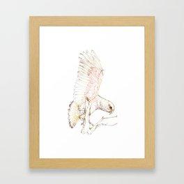 Mr Kea, New Zealand native parrot Framed Art Print