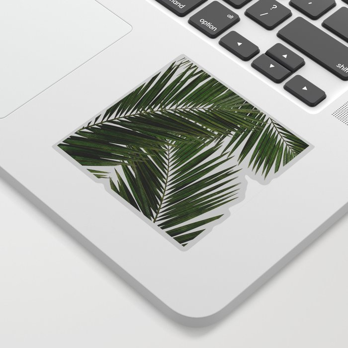 Palm Leaf III Sticker