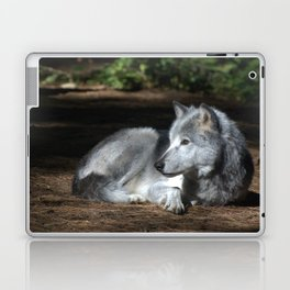 Gray Wolf at Rest Laptop & iPad Skin