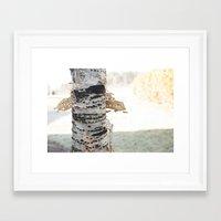birch Framed Art Prints featuring birch by Rae Snyder