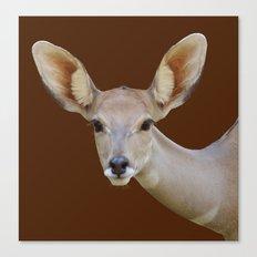 Lesser  Kudu female Canvas Print