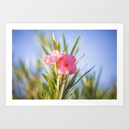Nerium oleander 2 Art Print